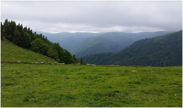 Vosges en été